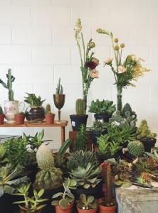 bwillow plants